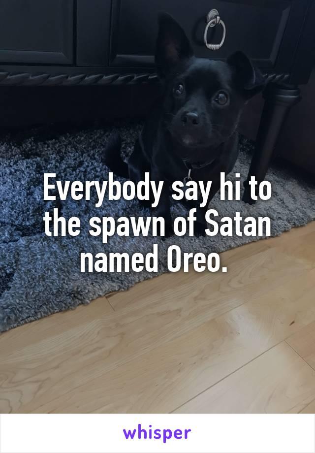 Everybody say hi to the spawn of Satan named Oreo.