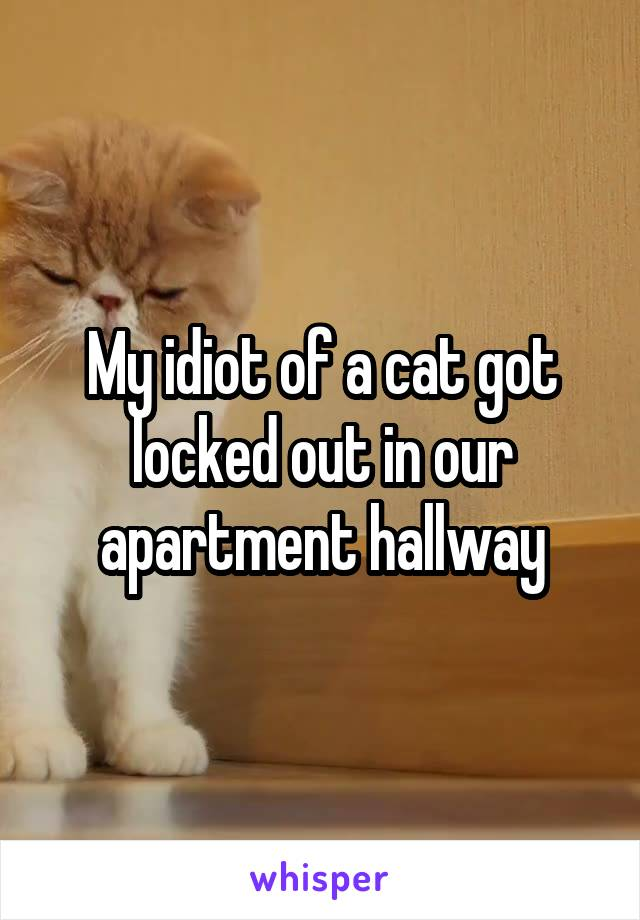 My idiot of a cat got locked out in our apartment hallway