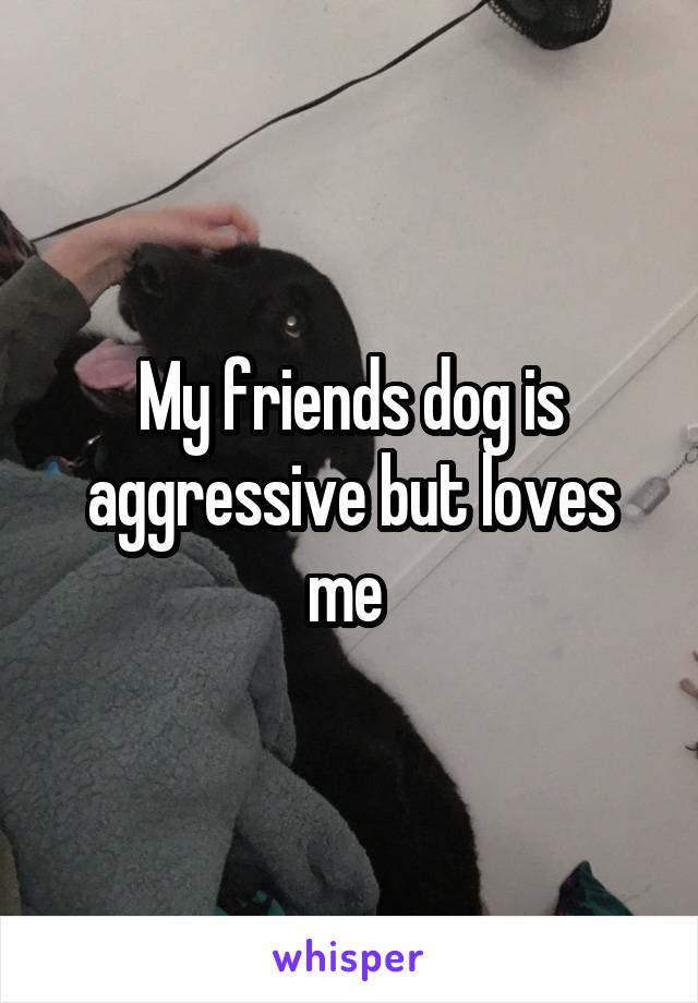 My friends dog is aggressive but loves me
