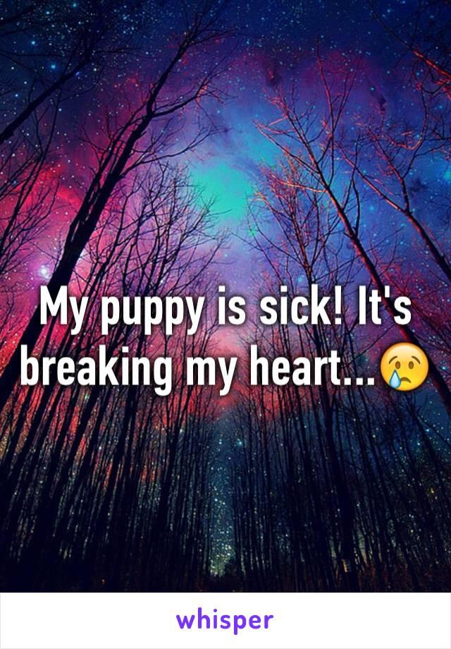 My puppy is sick! It's breaking my heart...😢