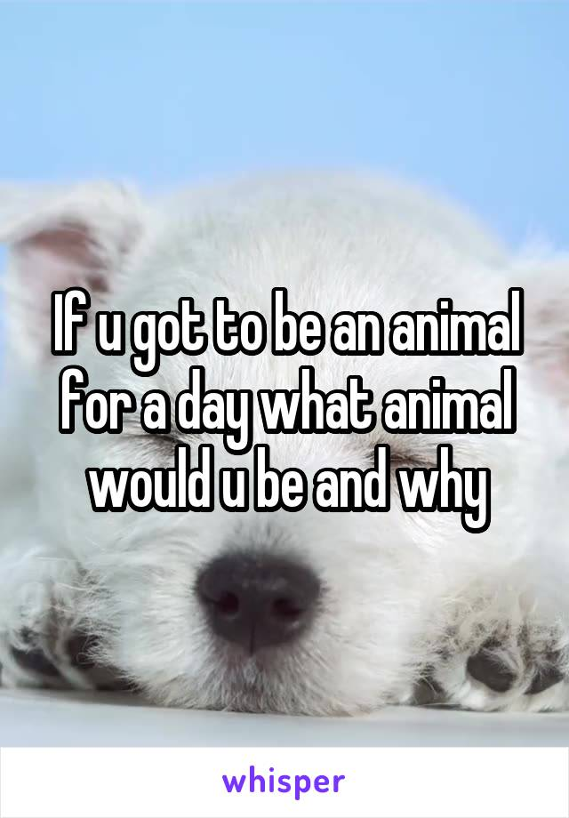 If u got to be an animal for a day what animal would u be and why