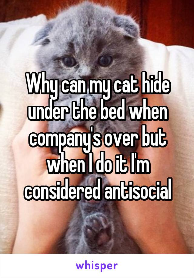 Why can my cat hide under the bed when company's over but when I do it I'm considered antisocial