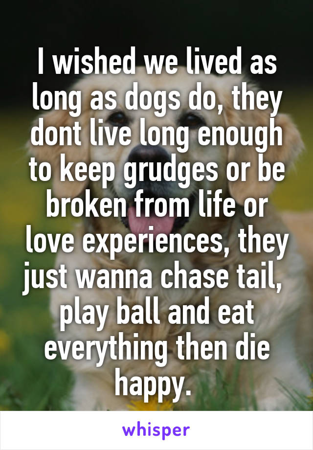 I wished we lived as long as dogs do, they dont live long enough to keep grudges or be broken from life or love experiences, they just wanna chase tail,  play ball and eat everything then die happy.