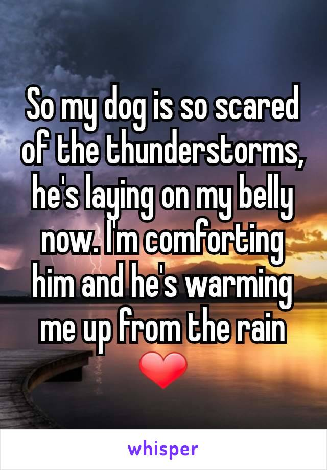 So my dog is so scared of the thunderstorms, he's laying on my belly now. I'm comforting him and he's warming me up from the rain ❤