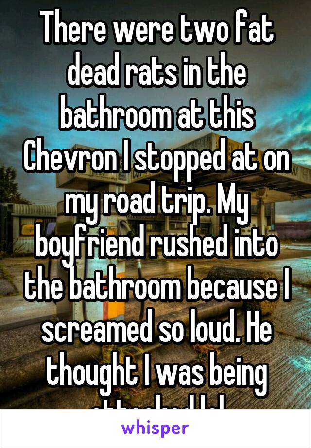 There were two fat dead rats in the bathroom at this Chevron I stopped at on my road trip. My boyfriend rushed into the bathroom because I screamed so loud. He thought I was being attacked lol