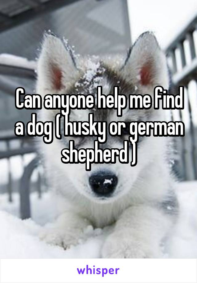 Can anyone help me find a dog ( husky or german shepherd )