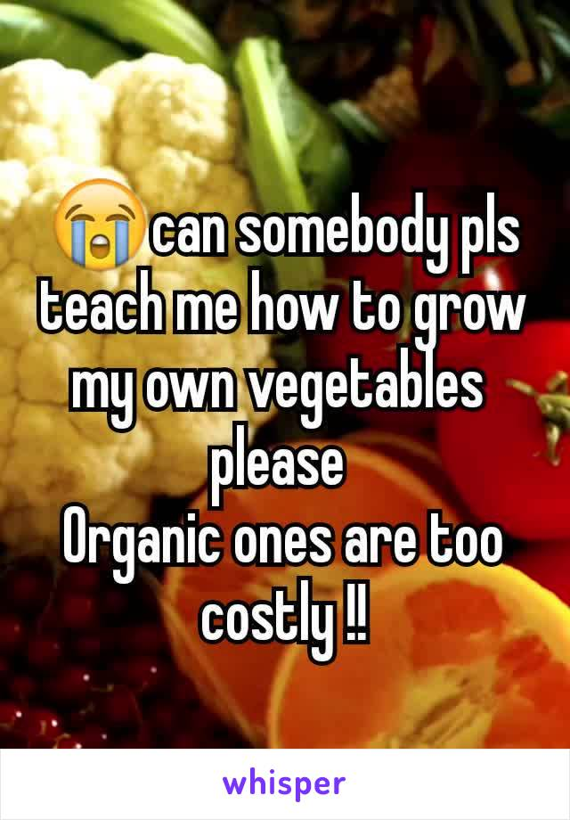 😭can somebody pls teach me how to grow my own vegetables  please  Organic ones are too costly !!