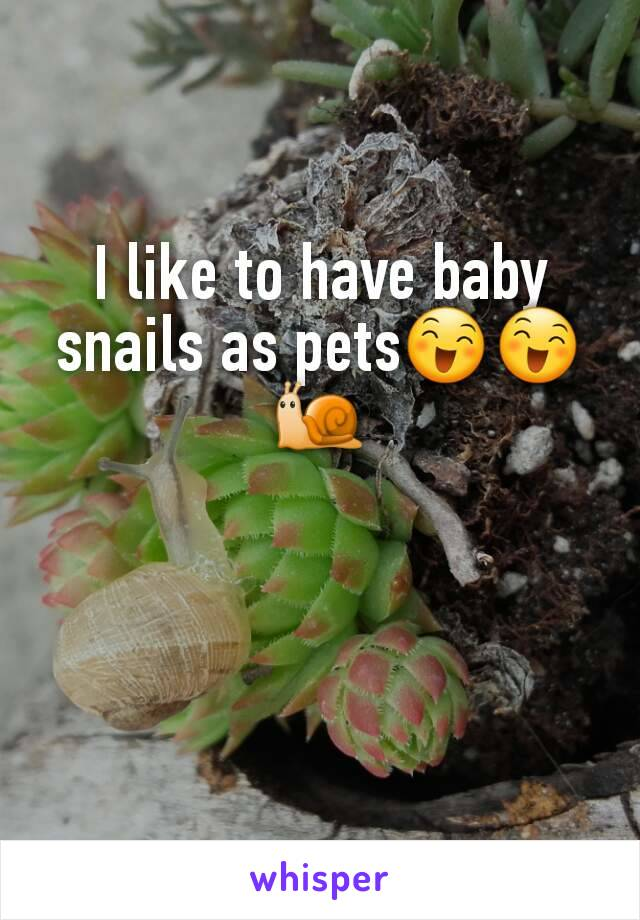 I like to have baby snails as pets😄😄🐌
