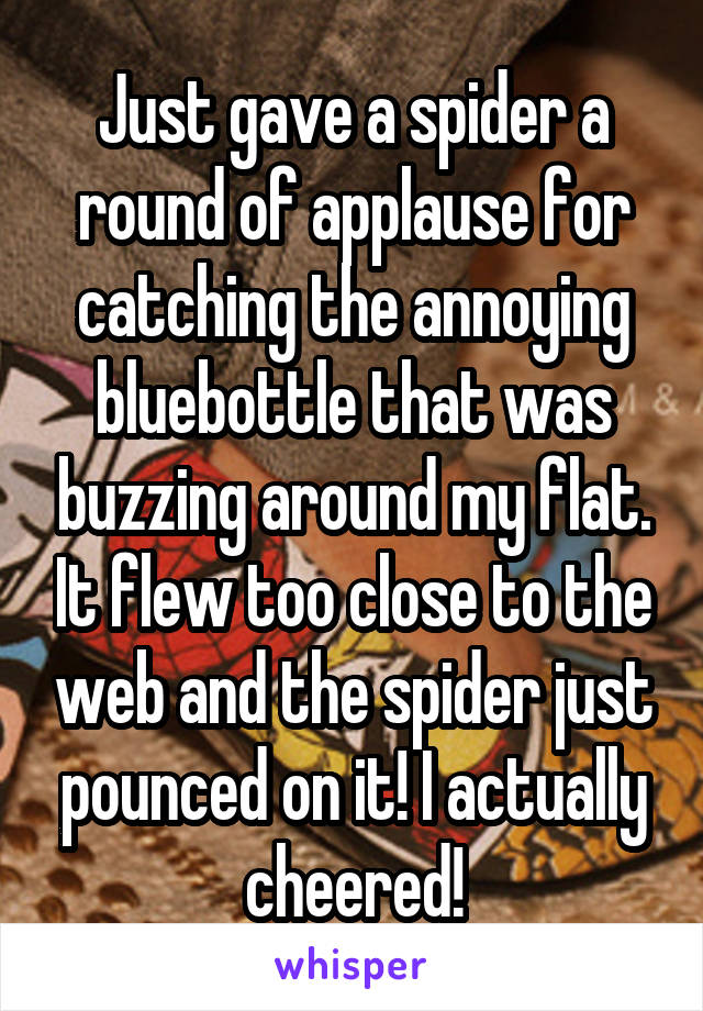 Just gave a spider a round of applause for catching the annoying bluebottle that was buzzing around my flat. It flew too close to the web and the spider just pounced on it! I actually cheered!