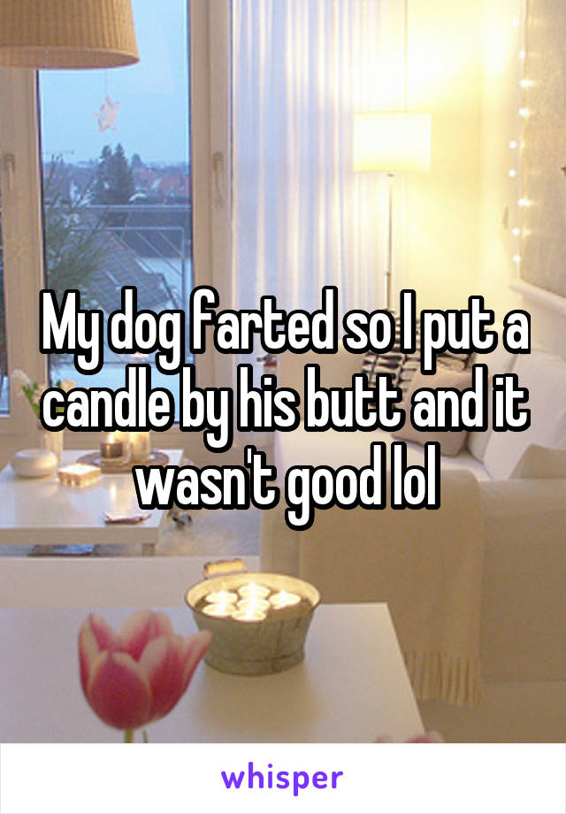My dog farted so I put a candle by his butt and it wasn't good lol