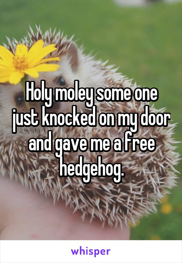 Holy moley some one just knocked on my door and gave me a free hedgehog.