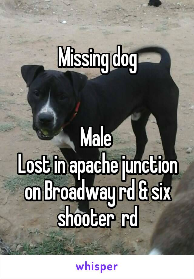 Missing dog   Male  Lost in apache junction on Broadway rd & six shooter  rd