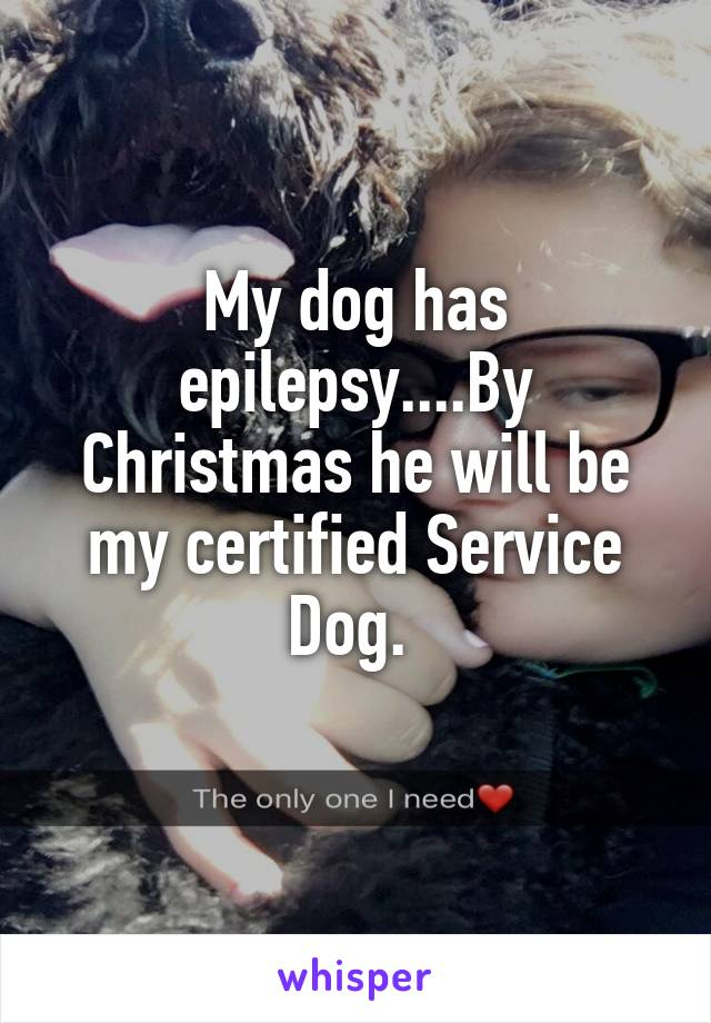 My dog has epilepsy....By Christmas he will be my certified Service Dog.
