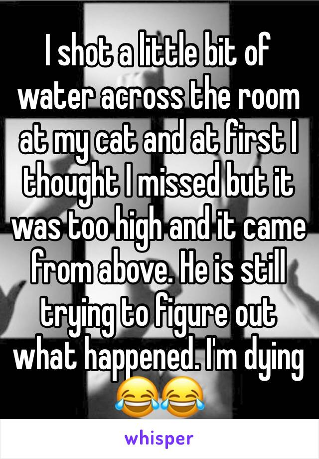 I shot a little bit of water across the room at my cat and at first I thought I missed but it was too high and it came from above. He is still trying to figure out what happened. I'm dying 😂😂