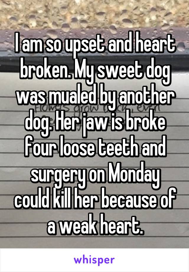 I am so upset and heart broken. My sweet dog was mualed by another dog. Her jaw is broke four loose teeth and surgery on Monday could kill her because of a weak heart.