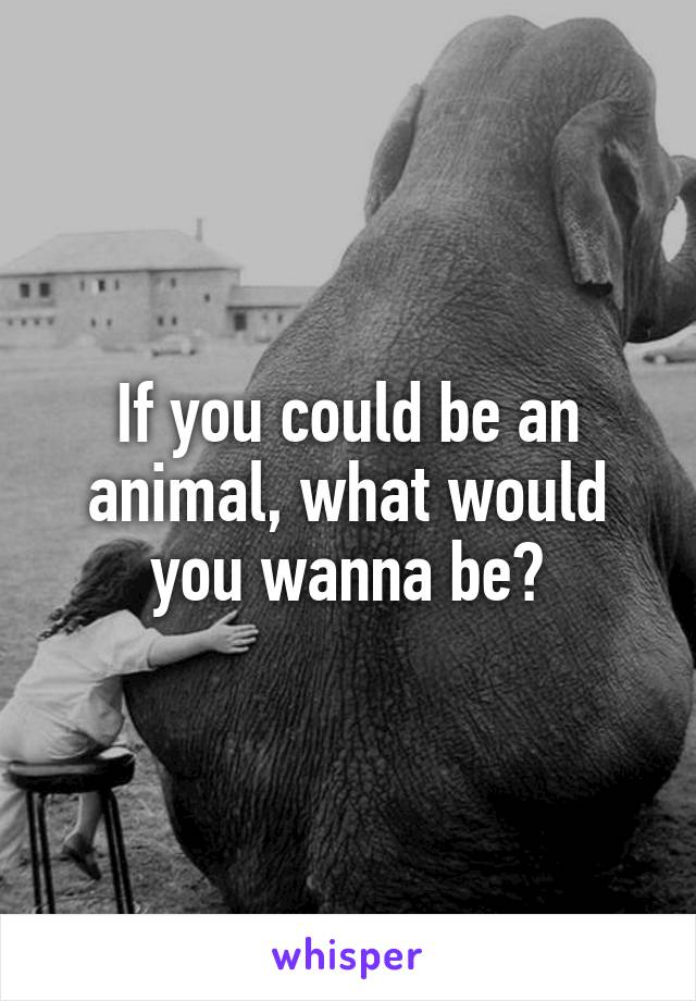 If you could be an animal, what would you wanna be?