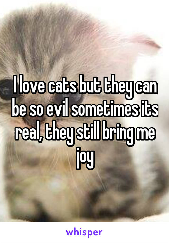I love cats but they can be so evil sometimes its real, they still bring me joy