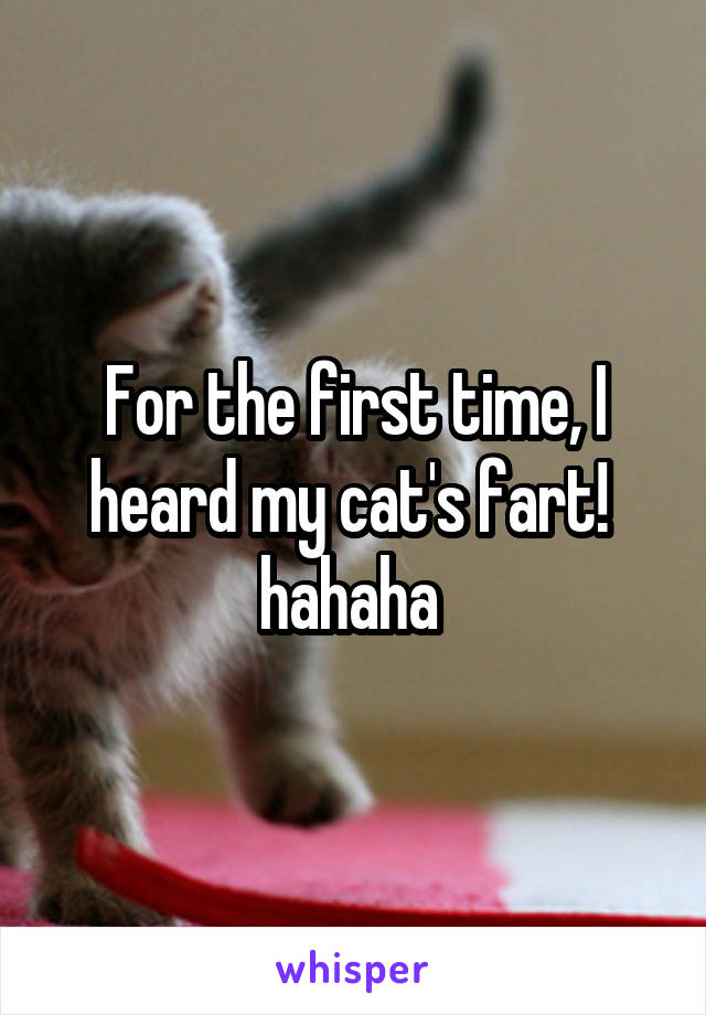 For the first time, I heard my cat's fart!  hahaha