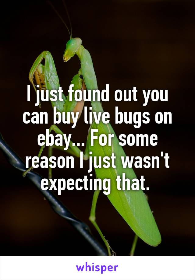 I just found out you can buy live bugs on ebay... For some reason I just wasn't expecting that.