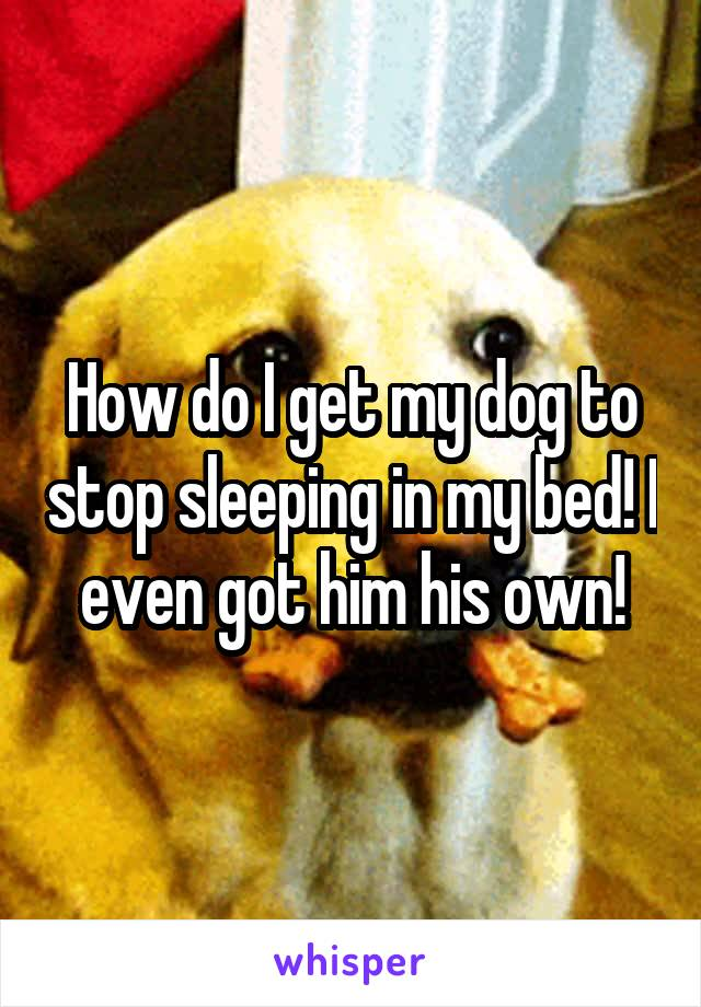 How do I get my dog to stop sleeping in my bed! I even got him his own!