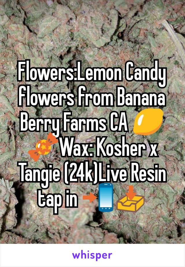 Flowers:Lemon Candy flowers from Banana Berry Farms CA 🍋🍬Wax: Kosher x Tangie (24k)Live Resin tap in 📲📥
