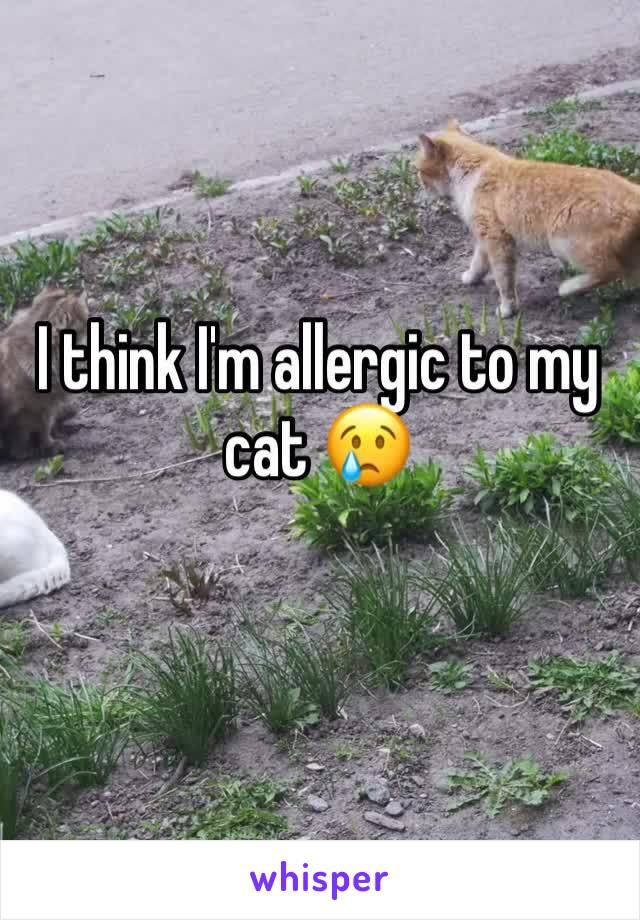 I think I'm allergic to my cat 😢