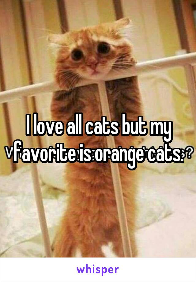 I love all cats but my favorite is orange cats.