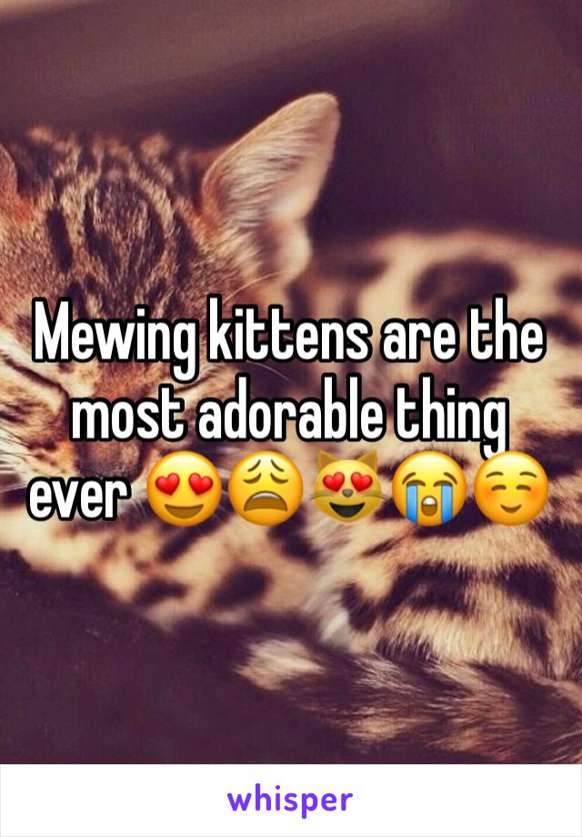 Mewing kittens are the most adorable thing ever 😍😩😻😭☺️