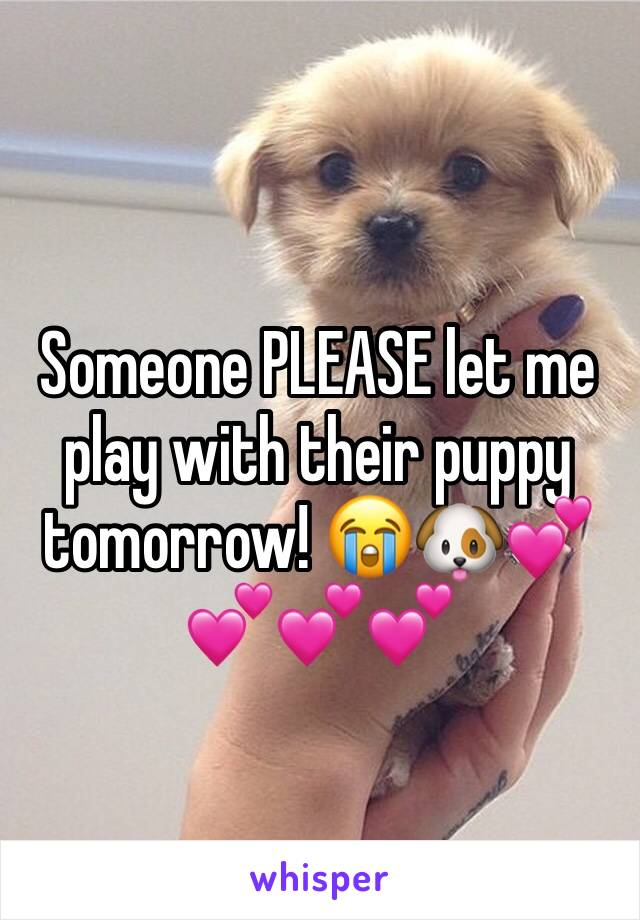Someone PLEASE let me play with their puppy tomorrow! 😭🐶💕💕💕💕