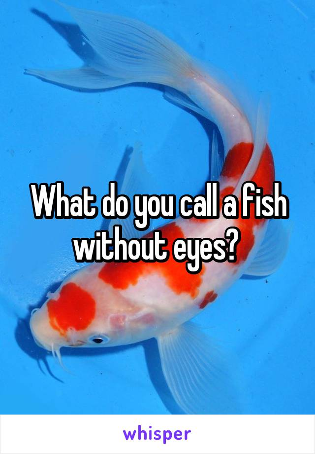 What do you call a fish without eyes?