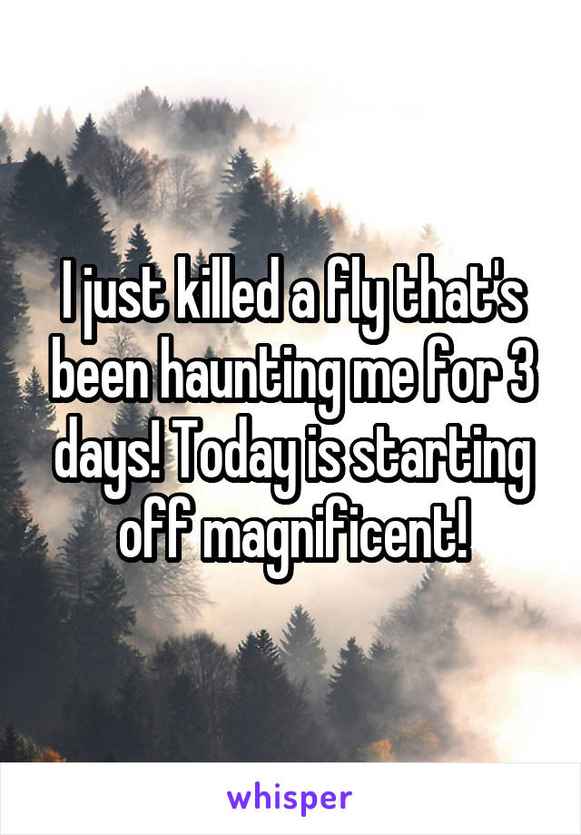 I just killed a fly that's been haunting me for 3 days! Today is starting off magnificent!