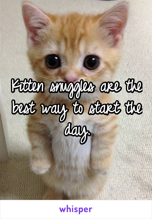 Kitten snuggles are the best way to start the day.