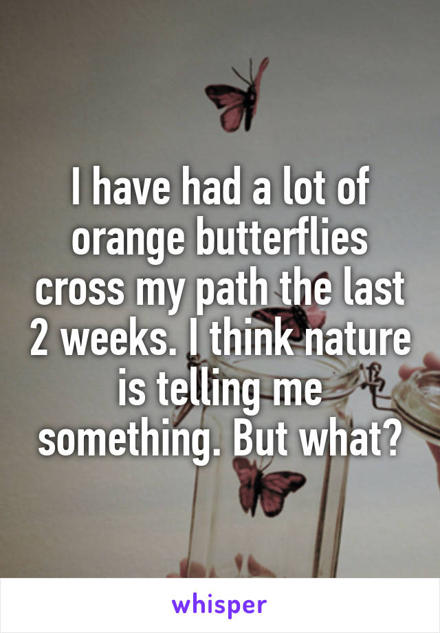 I have had a lot of orange butterflies cross my path the last 2 weeks. I think nature is telling me something. But what?