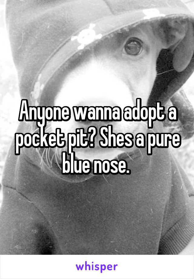 Anyone wanna adopt a pocket pit? Shes a pure blue nose.