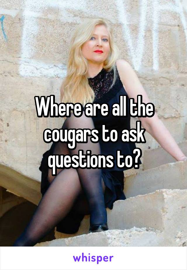 Where are all the cougars to ask questions to?