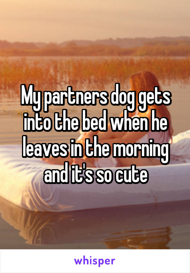 My partners dog gets into the bed when he leaves in the morning and it's so cute