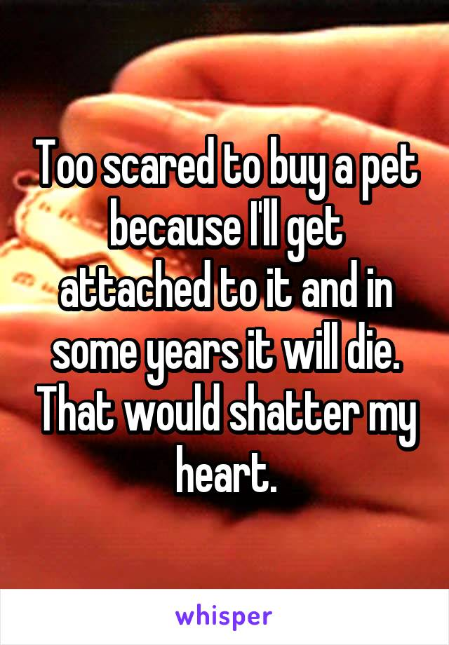Too scared to buy a pet because I'll get attached to it and in some years it will die. That would shatter my heart.