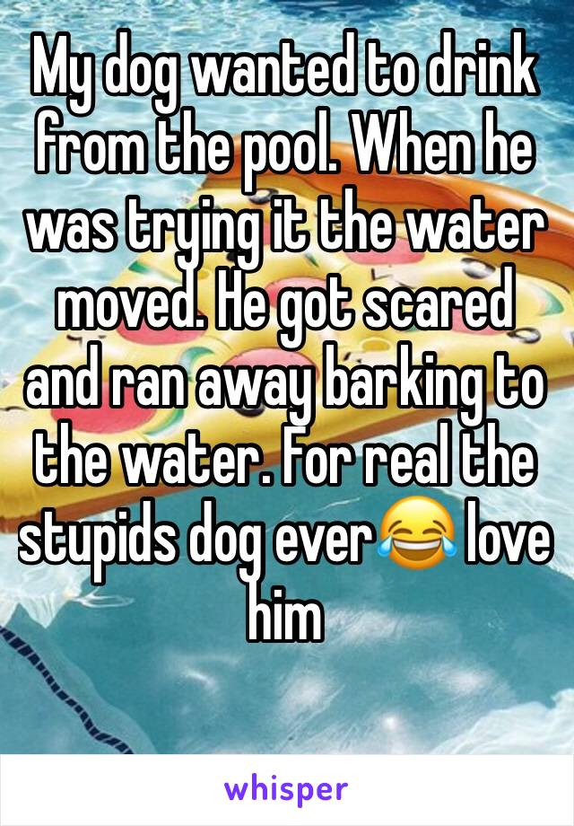 My dog wanted to drink from the pool. When he was trying it the water moved. He got scared and ran away barking to the water. For real the stupids dog ever😂 love him