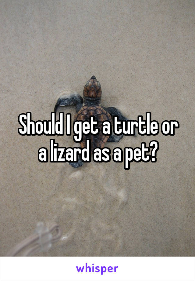 Should I get a turtle or a lizard as a pet?