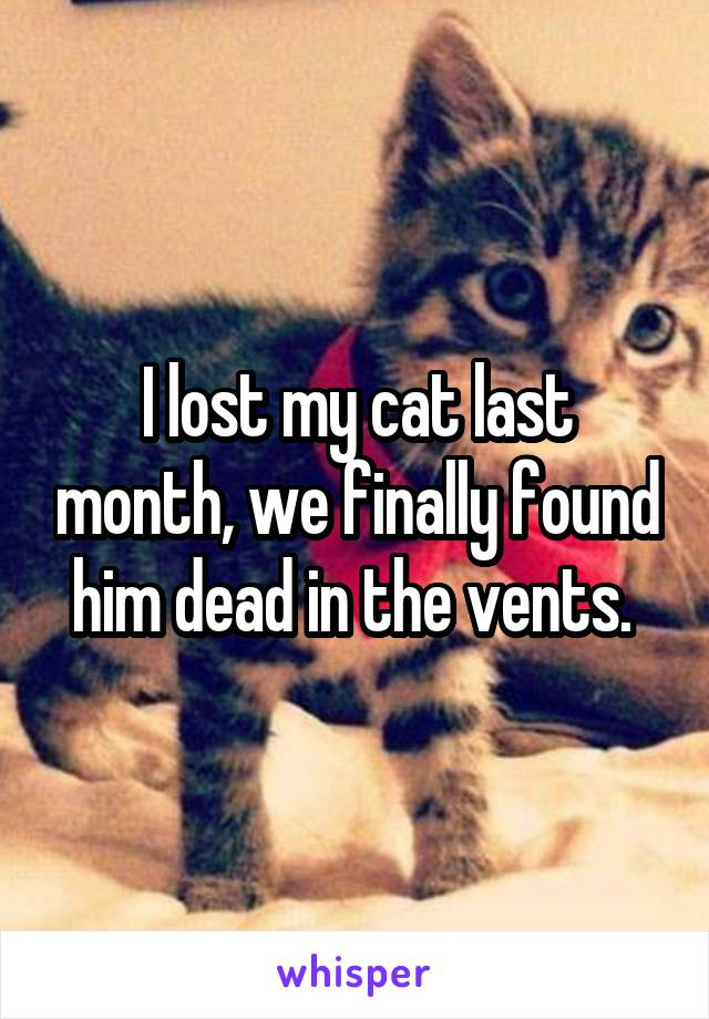 I lost my cat last month, we finally found him dead in the vents.