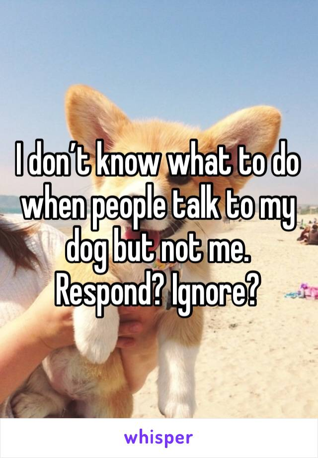 I don't know what to do when people talk to my dog but not me. Respond? Ignore?