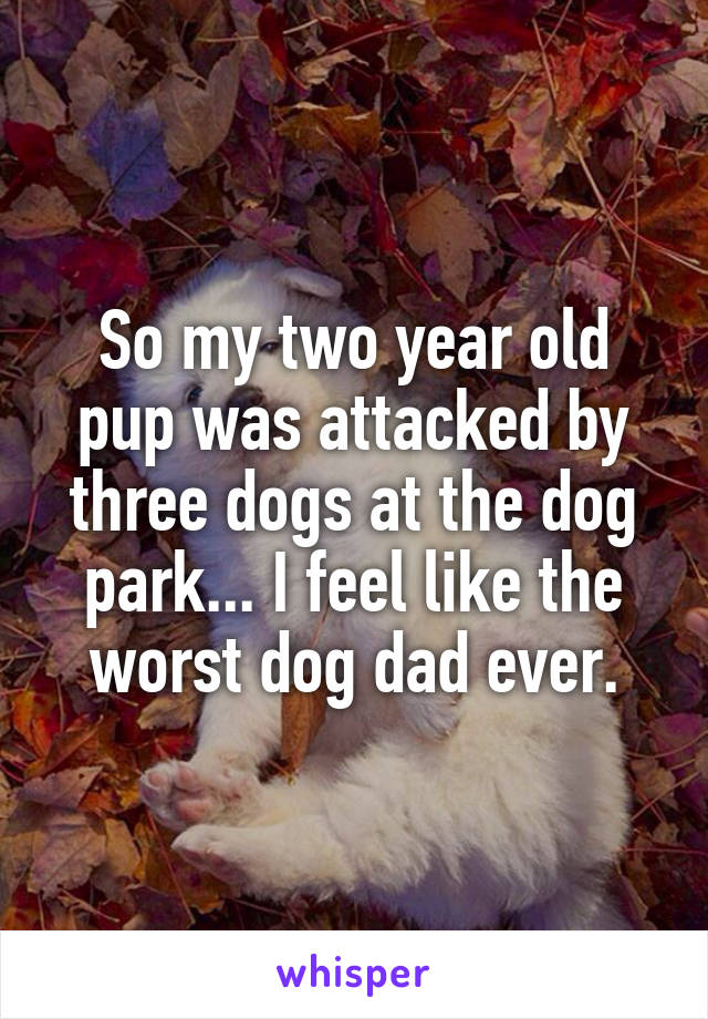 So my two year old pup was attacked by three dogs at the dog park... I feel like the worst dog dad ever.