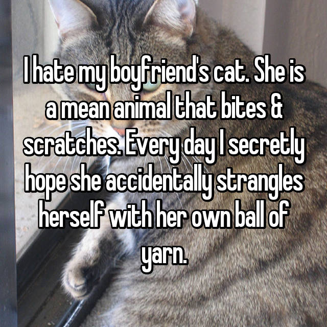 I hate my boyfriend's cat. She is a mean animal that bites & scratches. Every day I secretly hope she accidentally strangles herself with her own ball of yarn.
