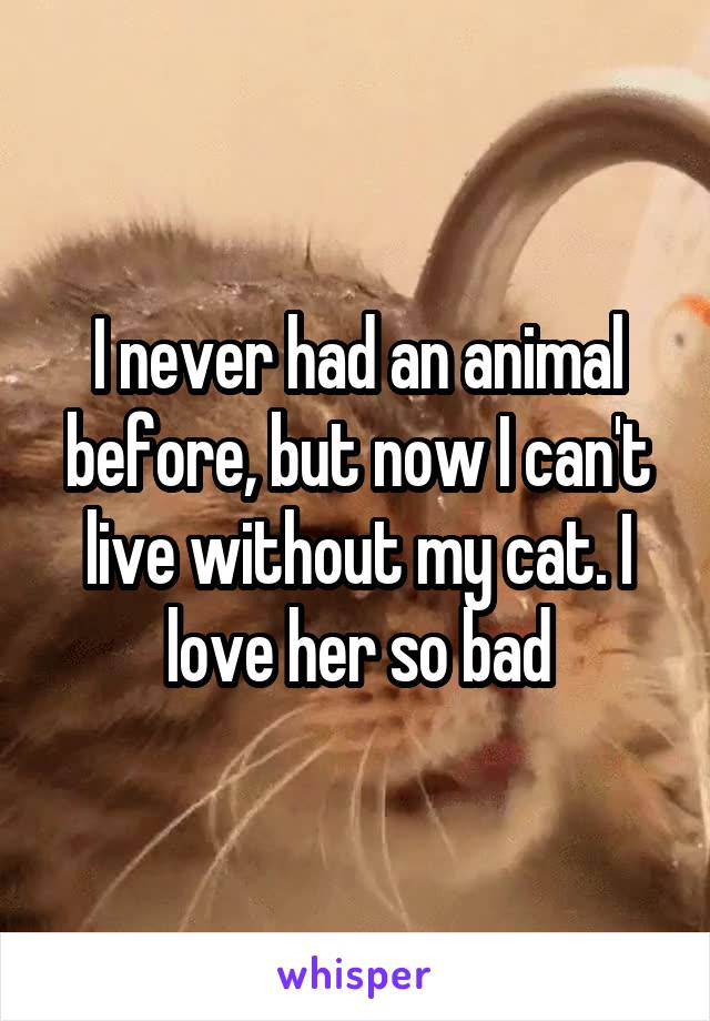 I never had an animal before, but now I can't live without my cat. I love her so bad
