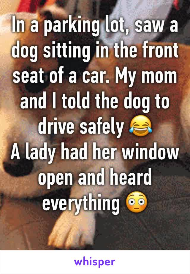 In a parking lot, saw a dog sitting in the front seat of a car. My mom and I told the dog to drive safely 😂 A lady had her window open and heard everything 😳