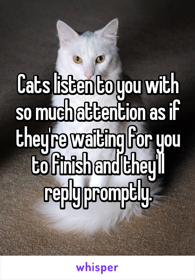 Cats listen to you with so much attention as if they're waiting for you to finish and they'll reply promptly.