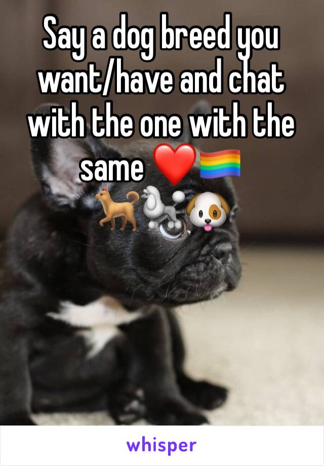 Say a dog breed you want/have and chat with the one with the same ❤️🏳️🌈 🐕🐩🐶