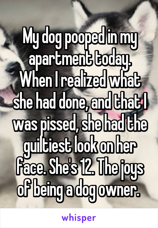My dog pooped in my apartment today. When I realized what she had done, and that I was pissed, she had the guiltiest look on her face. She's 12. The joys of being a dog owner.