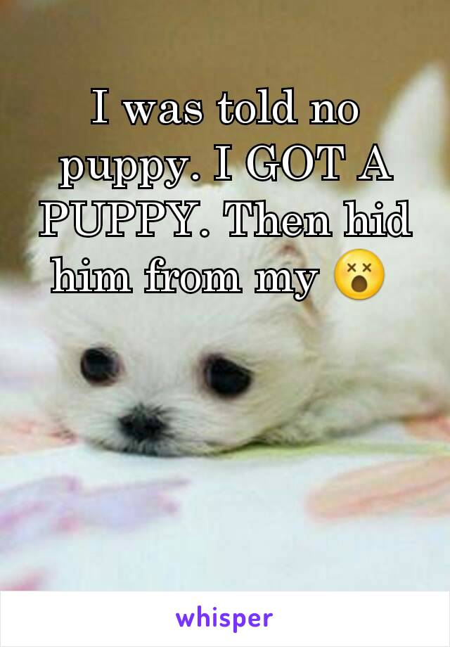 I was told no puppy. I GOT A PUPPY. Then hid him from my 😵