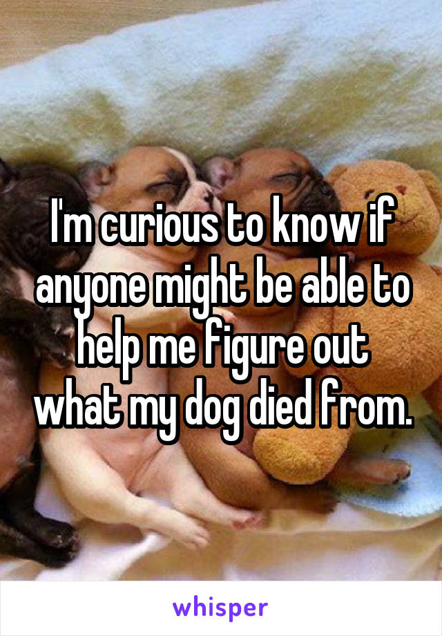 I'm curious to know if anyone might be able to help me figure out what my dog died from.